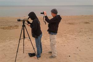 Birdwatching with an experienced guide on the coast of Western Estonia