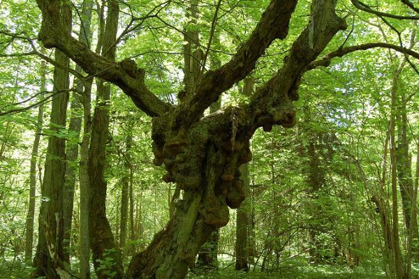 Abruka Nature Trails