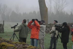 Vogelbeobachtung, Moore und die Küste Westestlands, neuntägige Tour