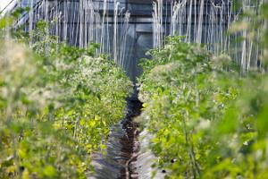 Klaara-Manni godīgas dārza ražas darbistaba
