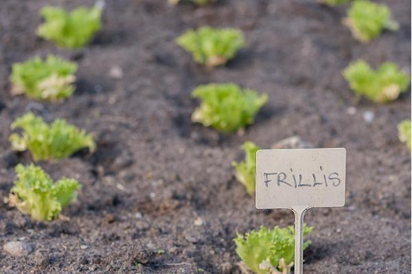 Klaara-Manni workshop för rättvisa grönsaker
