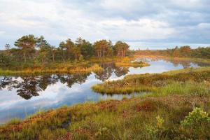 Naturreise Wildes Baltikum