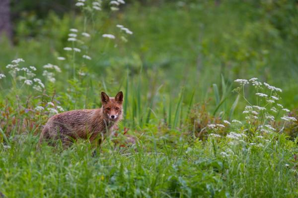 Bären- und Wildtierbeobachtungshütte in Alutaguse