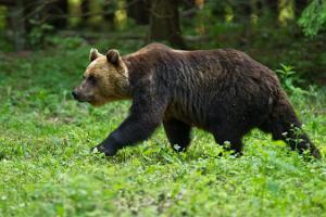 Hütte für die Fotografie von Braunbären und Waldtieren in Alutaguse (dt. Allentack)