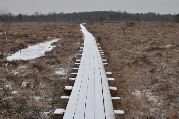 Koigi bog hiking trail