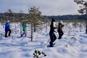 Bogshoeing and snowshoeing in Meenikunno bog