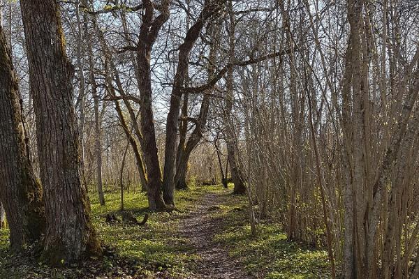Kävelyretki Saleveren Salumäellä