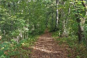 A walk on Salumägi Hill at Salevere