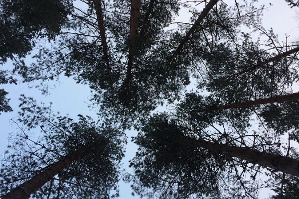 Alutaguses nacionālais parks un Īsaku dabas centrs
