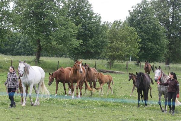Heimtalin hevoskasvatus