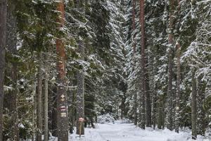 Karula Rahvuspargi Ähijärve teerada