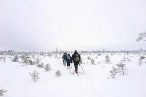 Seikle Vabaks bog shoe hike in Tolkuse bog