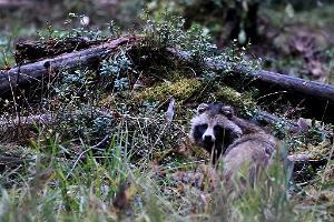 Bären, Wölfe und der Vogelzug – eine Naturbeobachtungsreise in Estland
