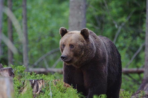 Karud, hundid ja lindude ränne - loomavaatlusreis Eestis