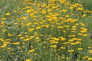 Karepas ārstniecības augu dārzs