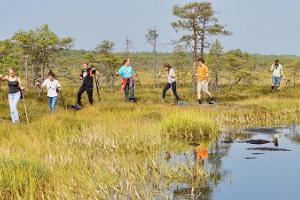 Поход на болотоступах с гидом по болоту Койтъярве
