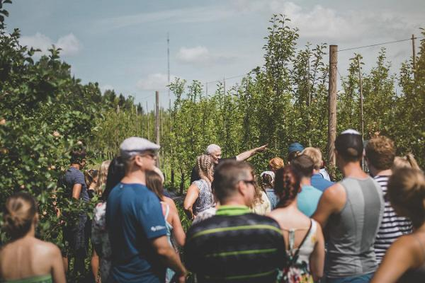 Picturesque cider tour and tasting at Siidrikoda
