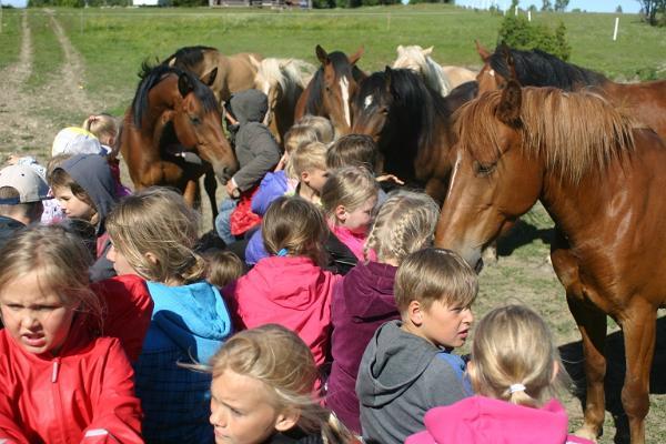 Ranna Rantšo Farm Animal Shelter