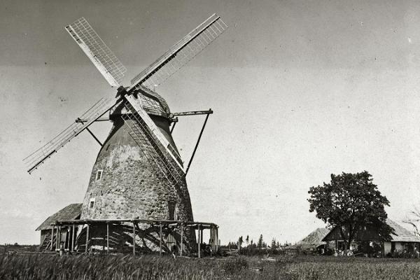 Suislepa tuulik