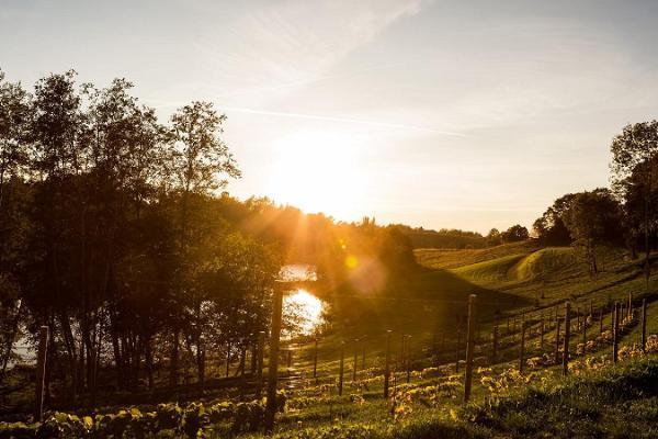 Visit to the Murimäe Wine Cellar and Vineyard