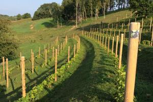"""""""Murimäe"""" vīna pagraba un vīnogulāju kalna apmeklējums"""
