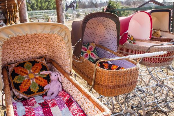 Семейный хутор ездовых собак «Хаски-парк» – мы ждем вас в гости!