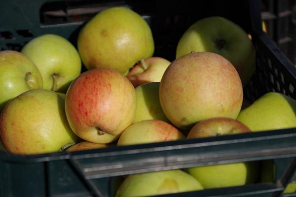 Freiluftmarkt in Tartu: estnische Äpfel