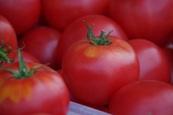 Freiluftmarkt in Tartu: reife Tomaten