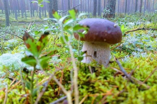 Upptäcktsresor för svampälskare i Pärnumaa
