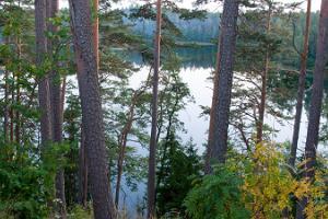 Самостоятельная экскурсия в сердце походного туризма Эстонии – Кырвемаа