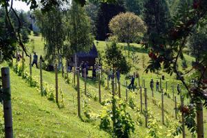 Посещение винного подвала и винодельной горы Муримяэ