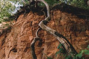 Sandstone outcrop in Viljandi Castle Park