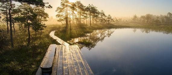 Pilguheit läbi looduskaamera