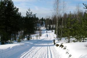 Тропы здоровья и лыжные тропы в Пирита