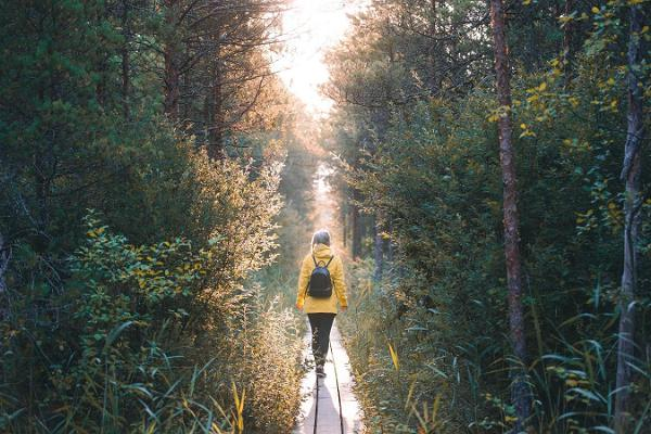 Wanderweg im Hochmoor Marimetsa