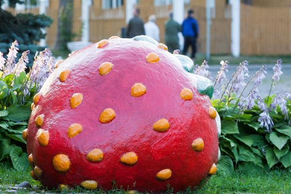 Strawberries in Viljandi
