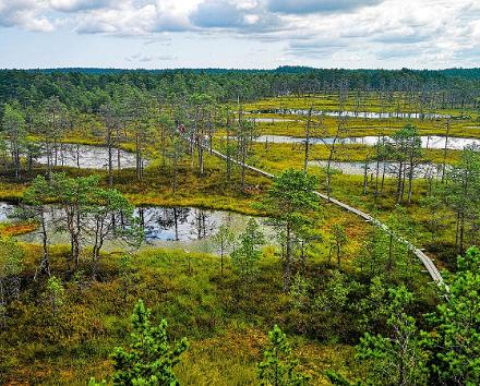 Sotahistorianmatkat Itä-Virossa