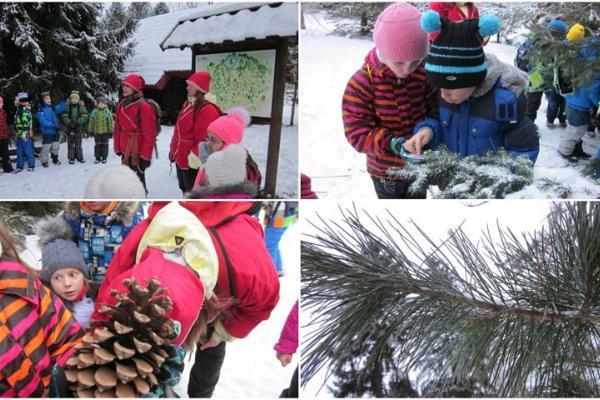 Giidiga jõuluretk Kõnnu dendropargis - Jõulupuu mitu palet