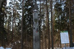 Apteekrimäe skogsled