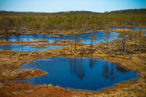 Дневная поездка: поход по болоту и эстонская баня