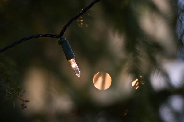 Visit Estonia, Christmas trees in Estonia