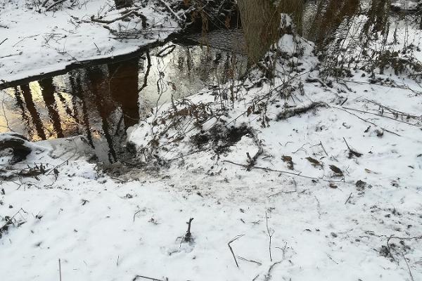 """Ubari Loodustarkuse Keskuse loodusretk """"Metsaelu talvel"""""""