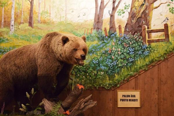 """Traktieris """"Hansa Tall"""" un īsts lāča izbāzenis"""