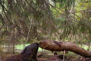 Ulukitarkuse retk metsa loodusgiidiga