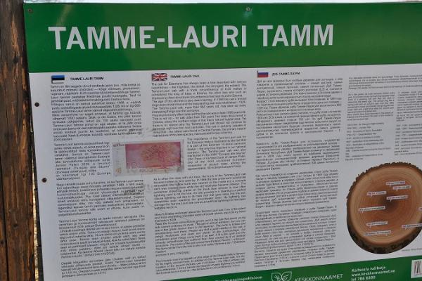 Tamme-Lauri tamm