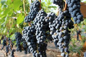 Järiste Veinitalu veinide ja -siidrite degusteerimise töötuba