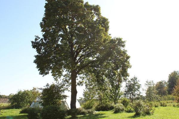 Järiste Veinitalu aed ning kasvuhooned