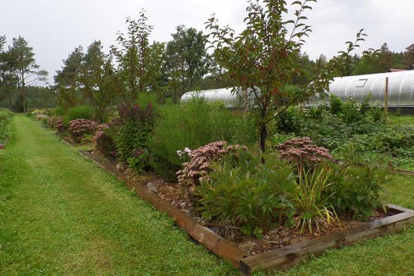"""Sāremā """"Teekoda Aed"""" dārzs. Sāremā stādaudzētavas ārstniecības augu, garšaugu un maz izplatīto ogu dārzs."""