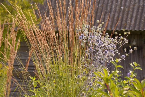Saaremaa Puukooli pojengide näidisaed - inspiratsioon igale aednikule