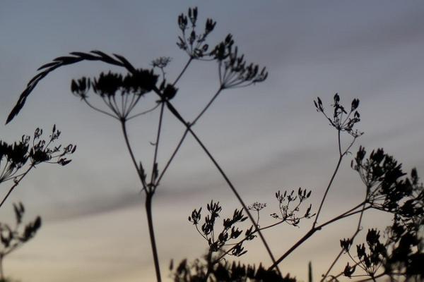 """Sāremā """"Peony Gardens"""" - romantisks dārzs salas vidienē"""